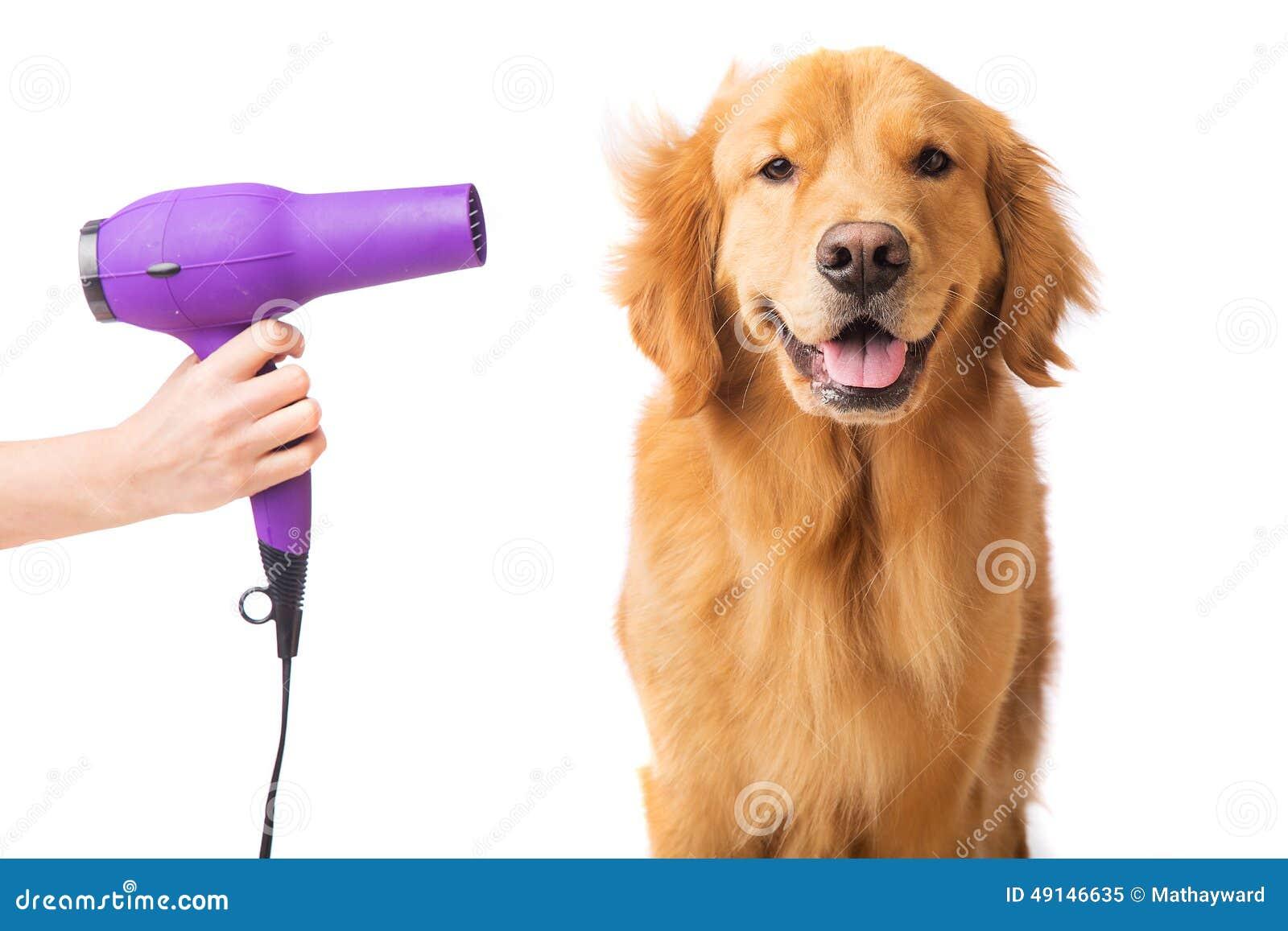 Happy Dog At The Groomer Stock Photo - Image: 49146635 - photo#15