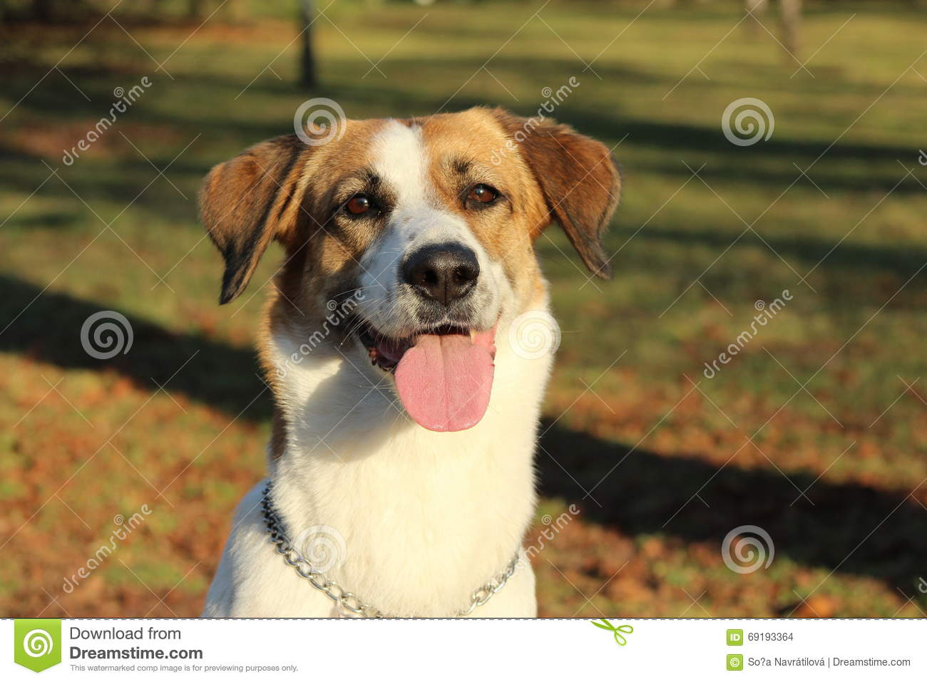 Happy Dog Stock Photo - Image: 69193364 - photo#30