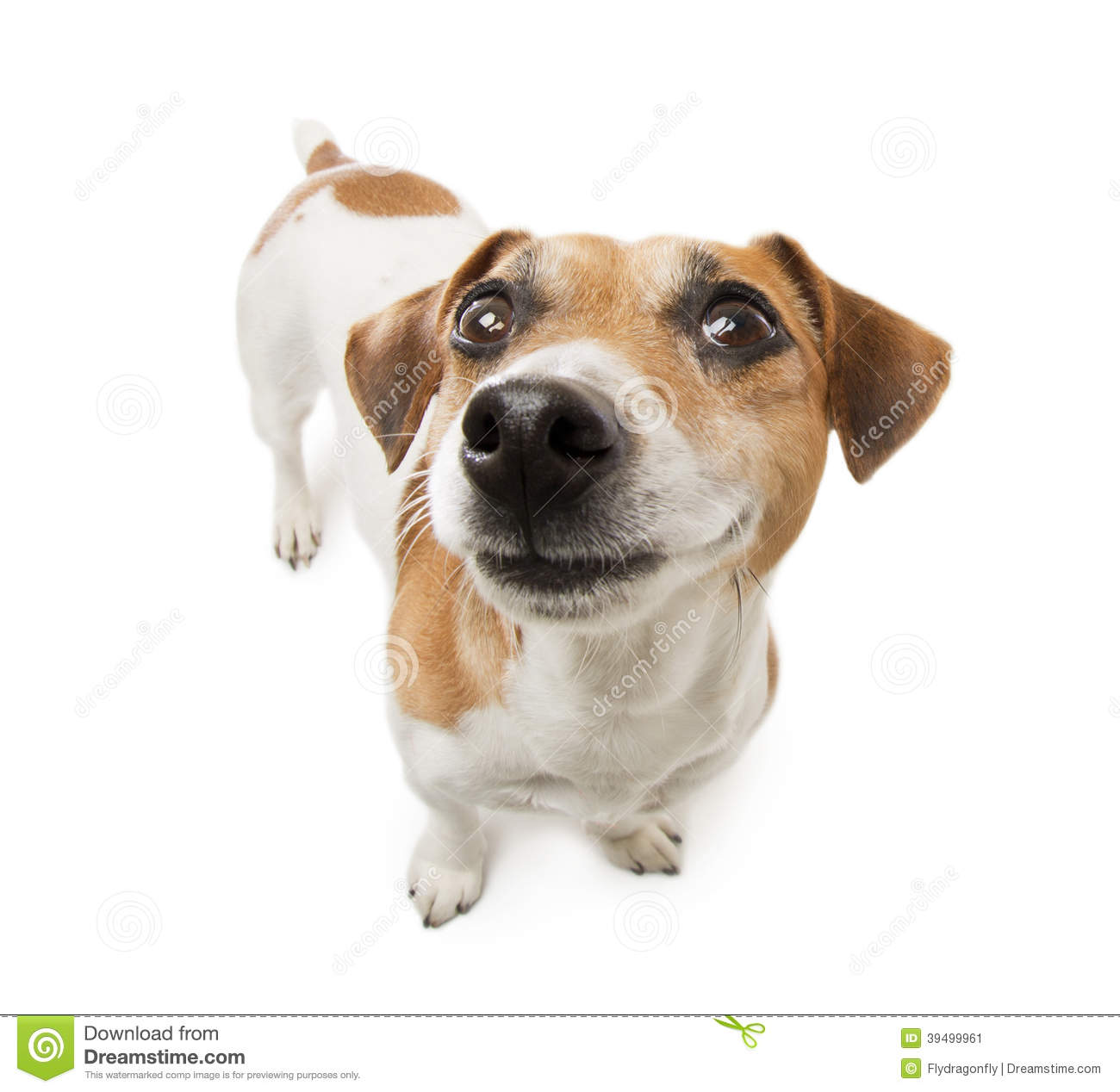 Happy Dog Stock Photo - Image: 39499961 - photo#15