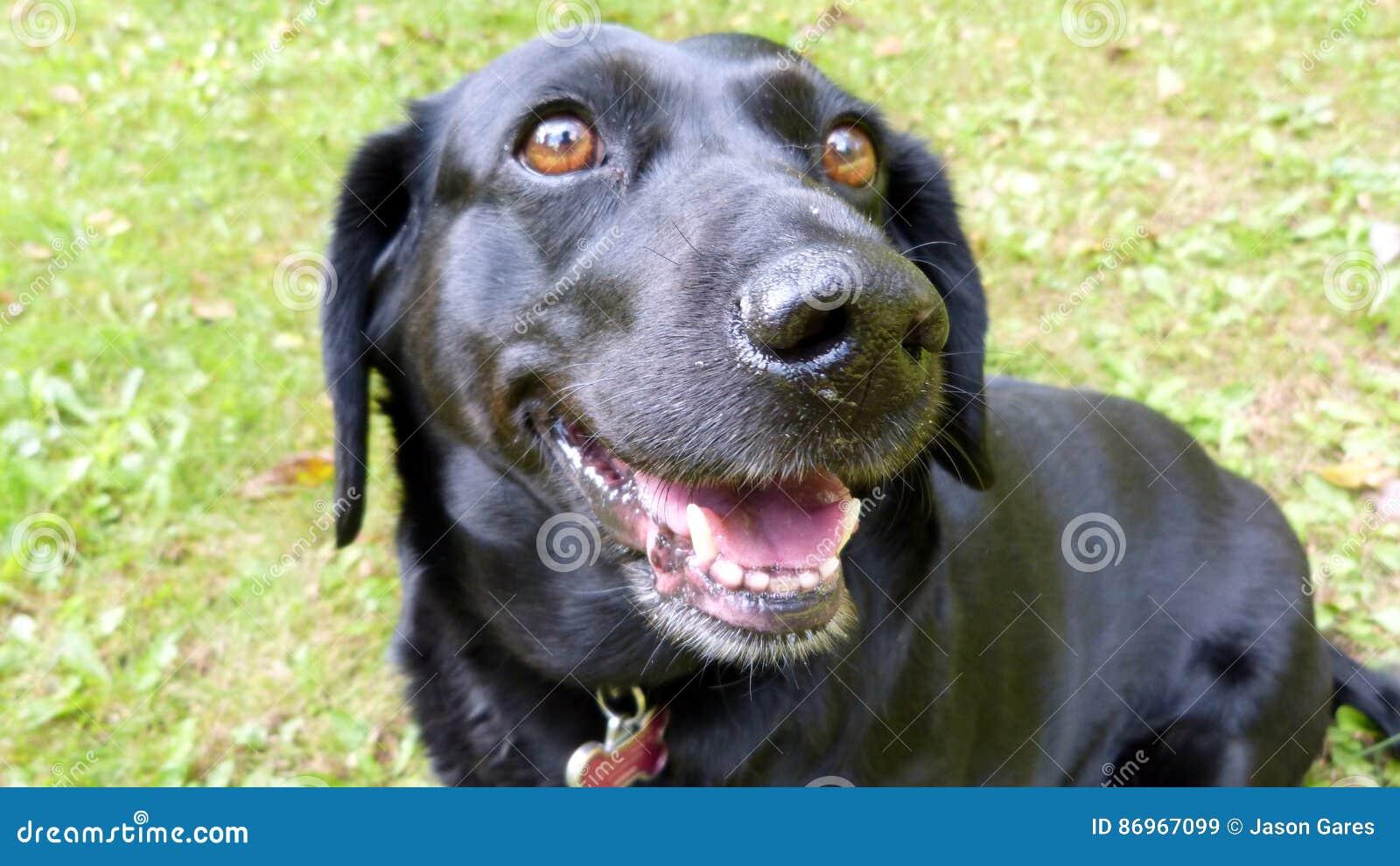 Happy Dog in Summer