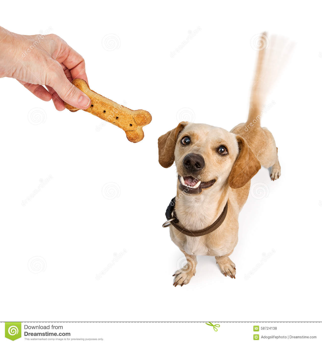 Happy Dog Wagging Tail For Treat