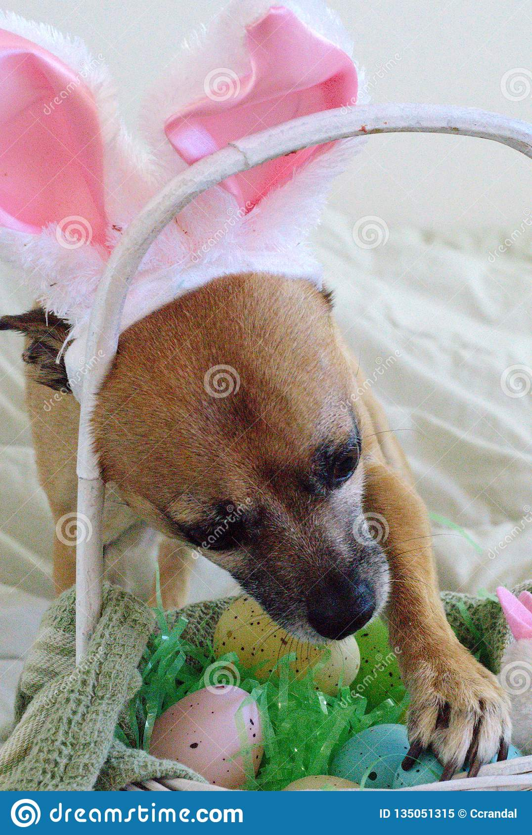 409 Happy Easter Dog Bunny