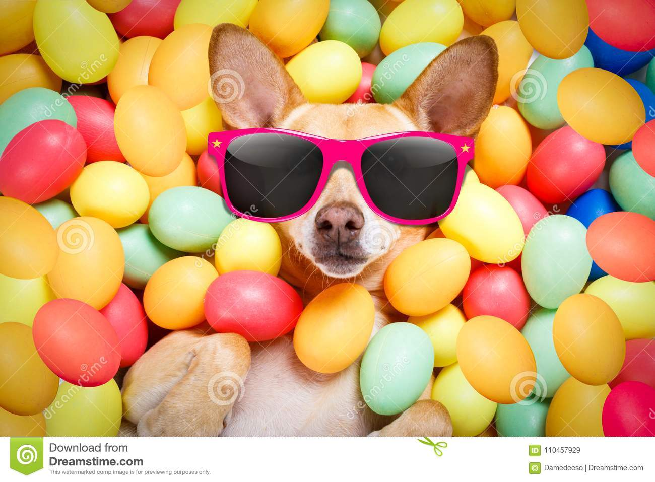 Download Happy easter dog with eggs stock image. Image of eggs - 110457929