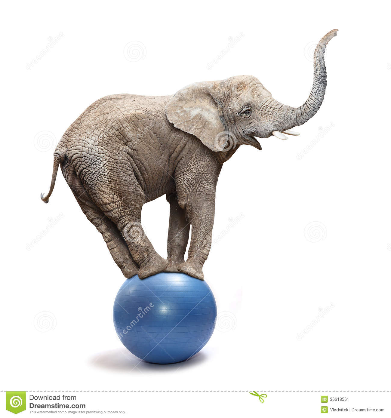 Happy elephant stock image image of africa joke mammals 36618561