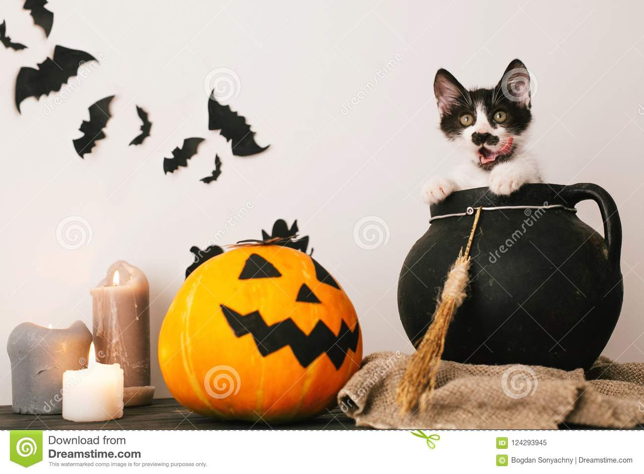Happy Halloween concept. cute kitty sitting in witch cauldron wi