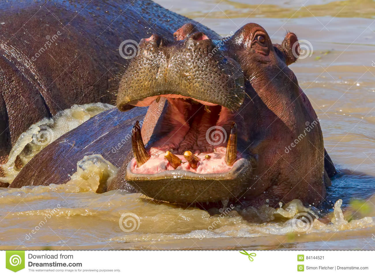 Happy Hippopotamus
