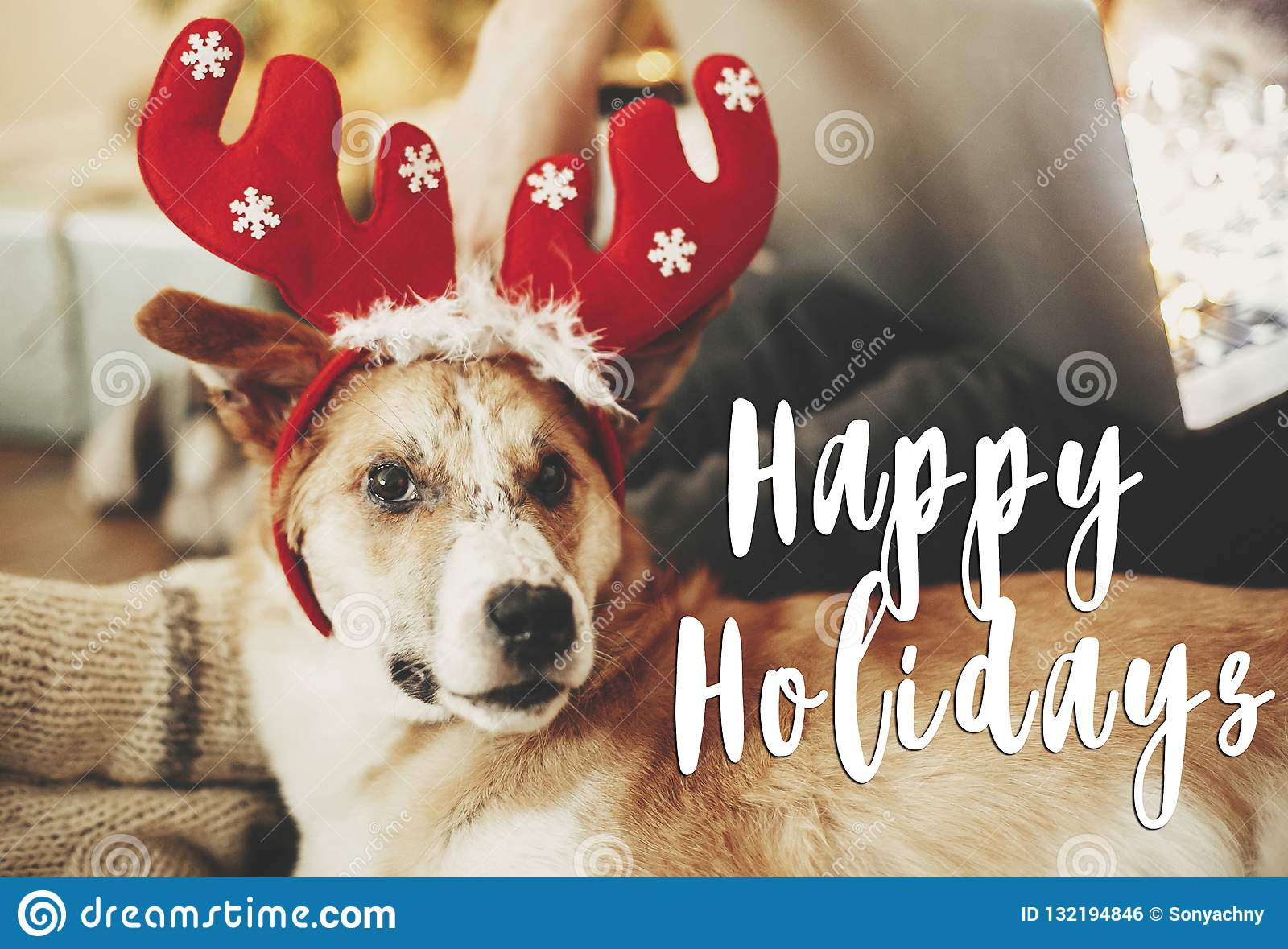 Happy Holidays Text On Dog With Reindeer Antlers Sitting At Owne Stock Photo Image Of Eyes Greetings 132194846