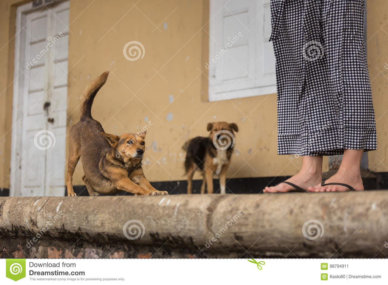 Happy Lazy Stray Dogs Hanging Out At The Train Station  Stock Image