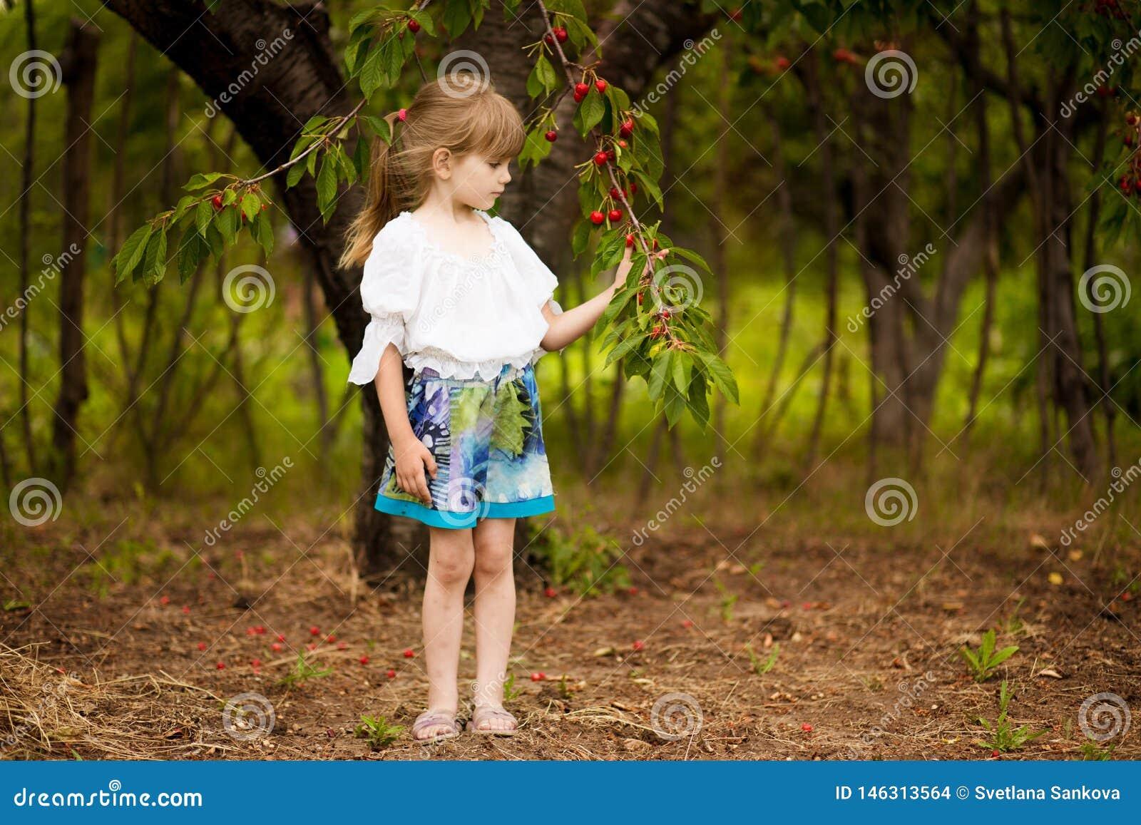 Happy little girl play near cherry tree in summer garden. Kid picking cherry on fruit farm. Child pick cherries in orchard.