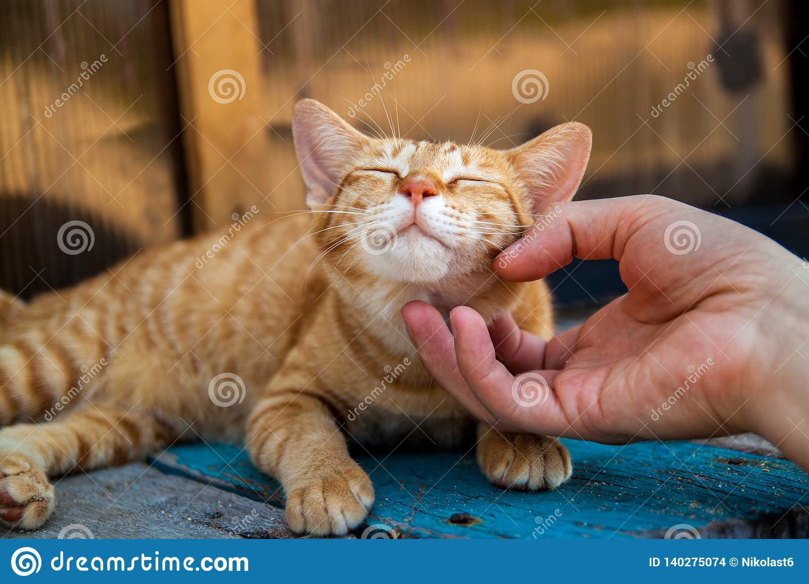 Happy little red cat is pleased with hand stroking.