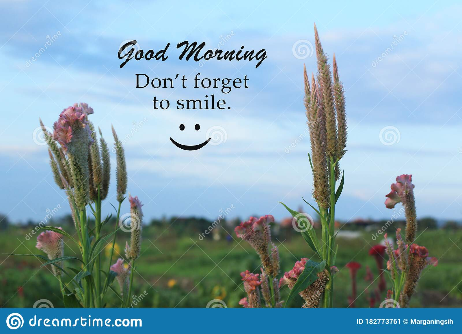 Morning Greeting Inspirational Quote Good Morning Do Not Forget To Smile Morning Card Greeting With Cockscomb Spring Flowers Stock Image Image Of Beginning Field 182773761