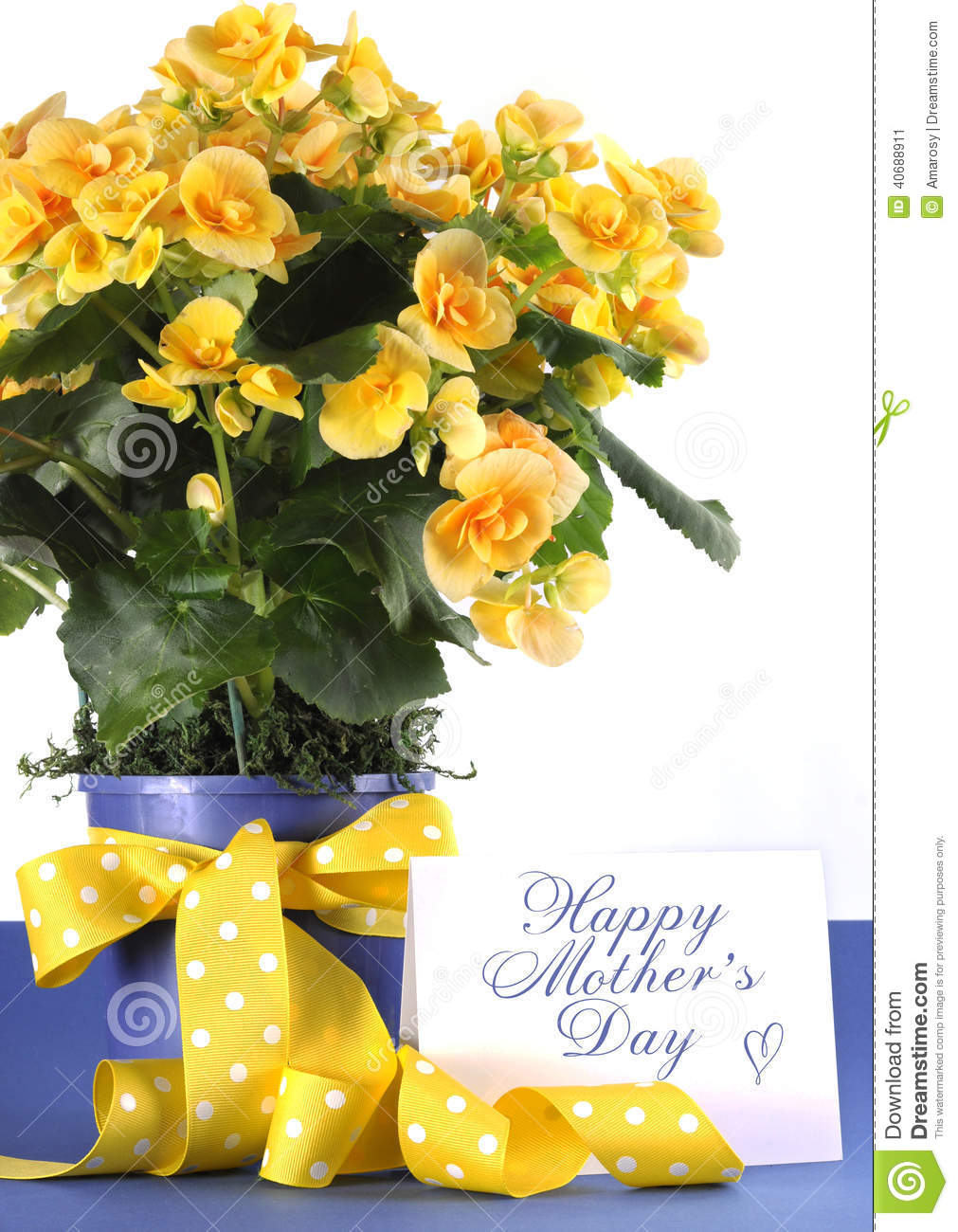 Happy Mothers Day Beautiful Yellow Begonia Potted Plant Gift With