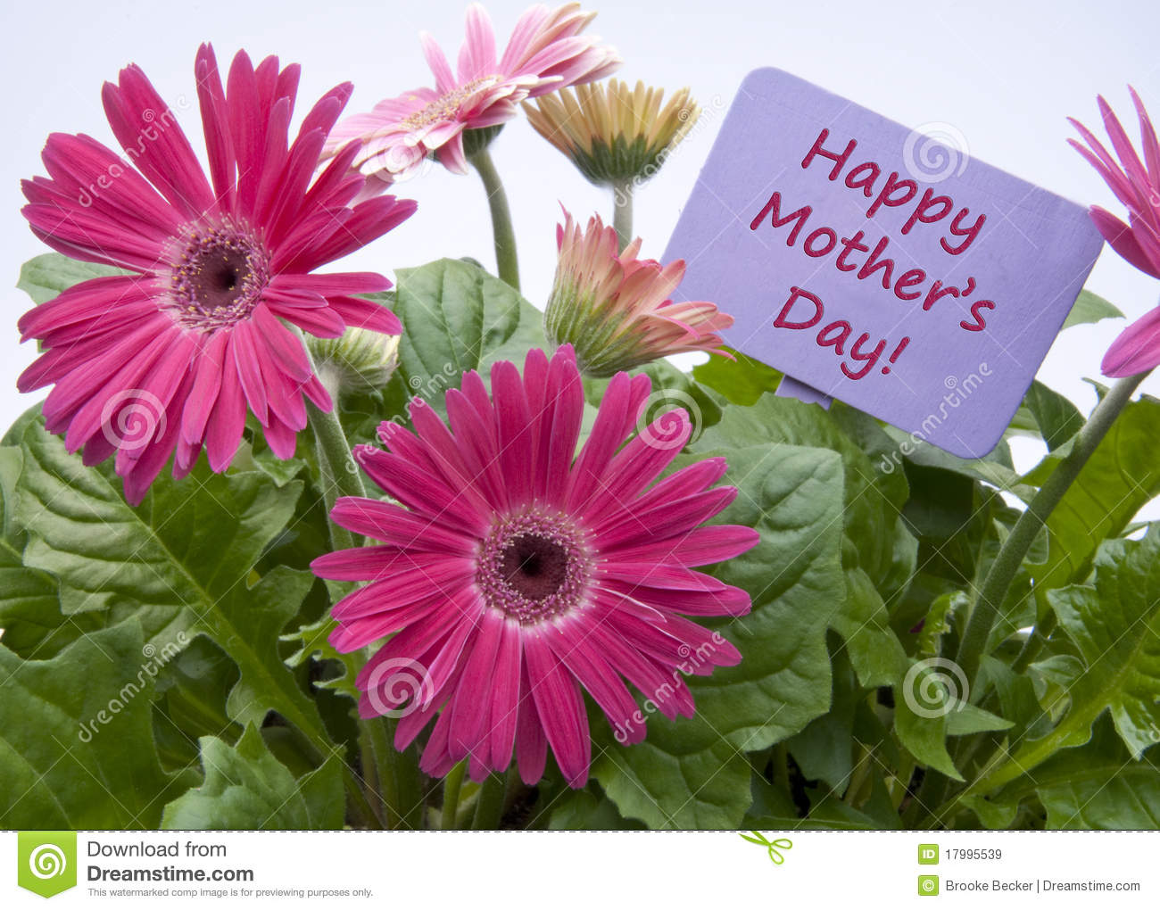 happy mothers day with flowers royalty free stock images  image, Natural flower