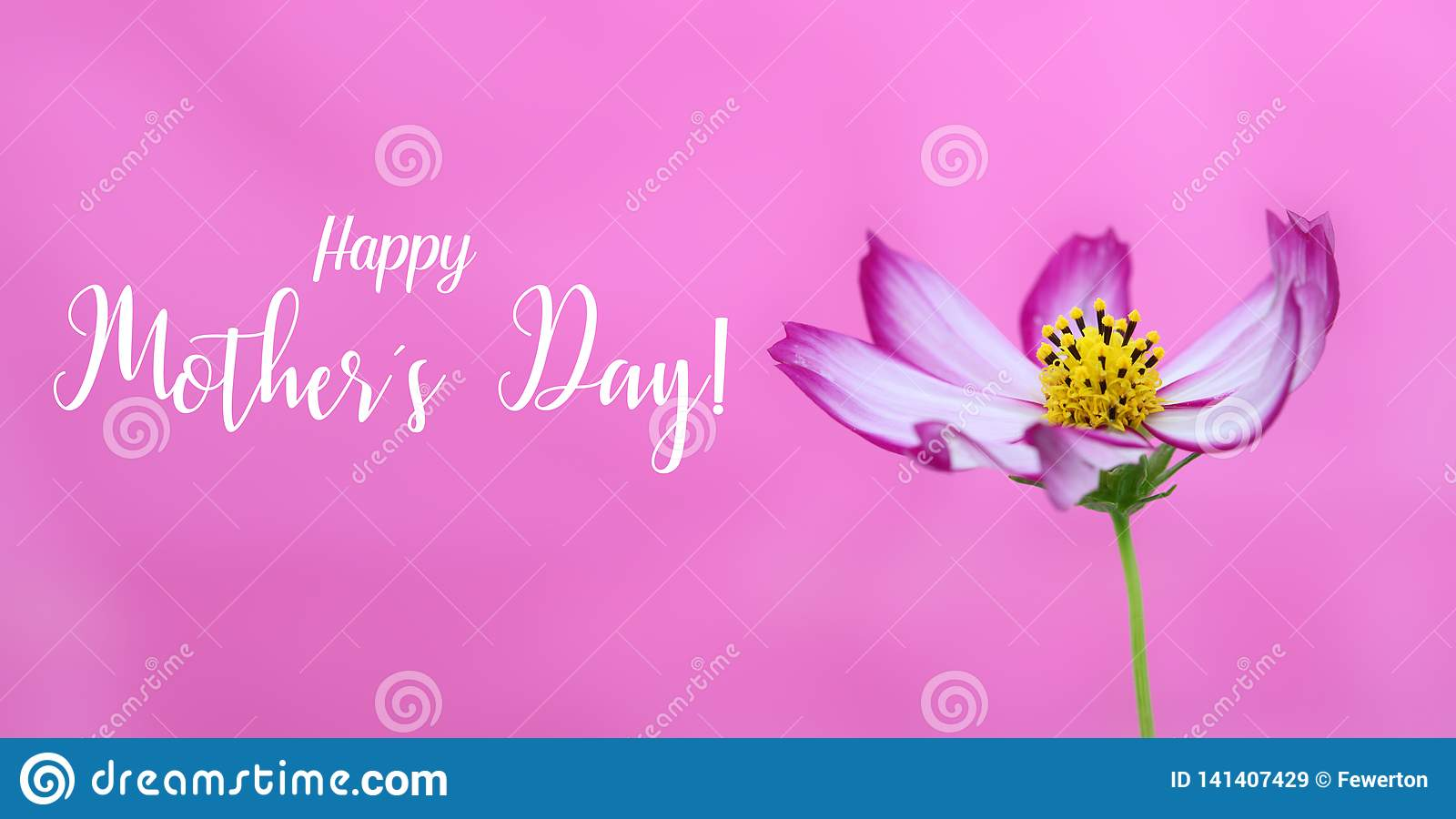 Happy Mothers`s Day! and pink wild cosmos flower macro photo as wide banner pink background and message text. Happy Mother Day