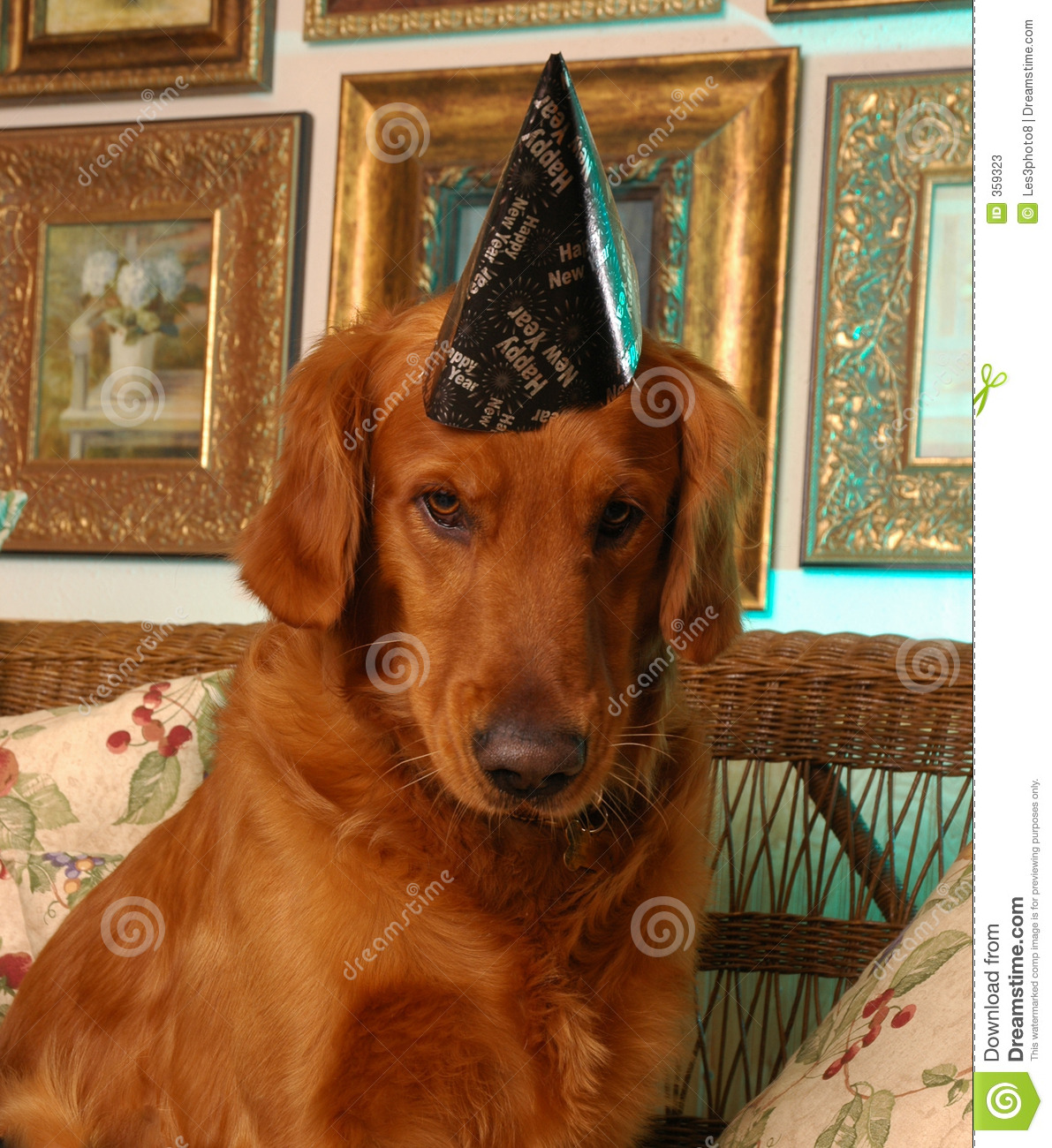 Happy New Year From Buster Stock Image Image Of Party 359323