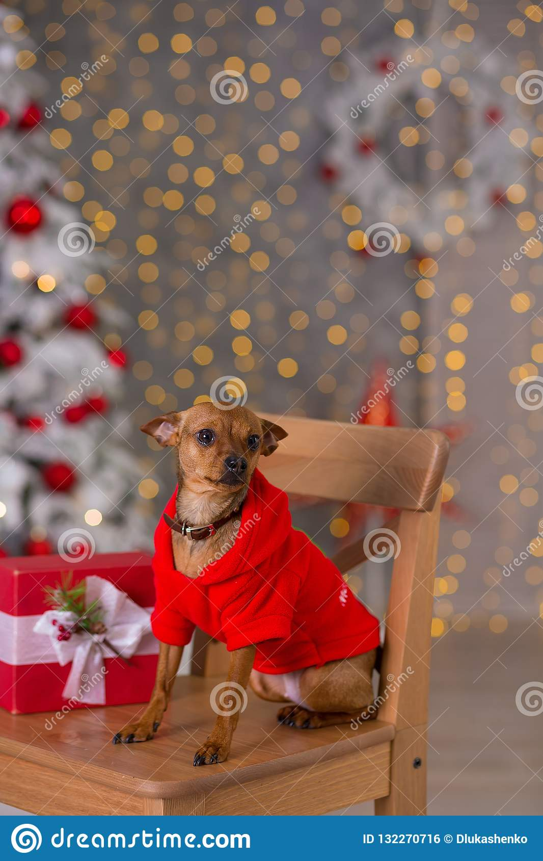 Happy New Year, Christmas, puppy dog. holidays and celebration, pet in the room the Christmas tree. Dog in Santa Claus dress