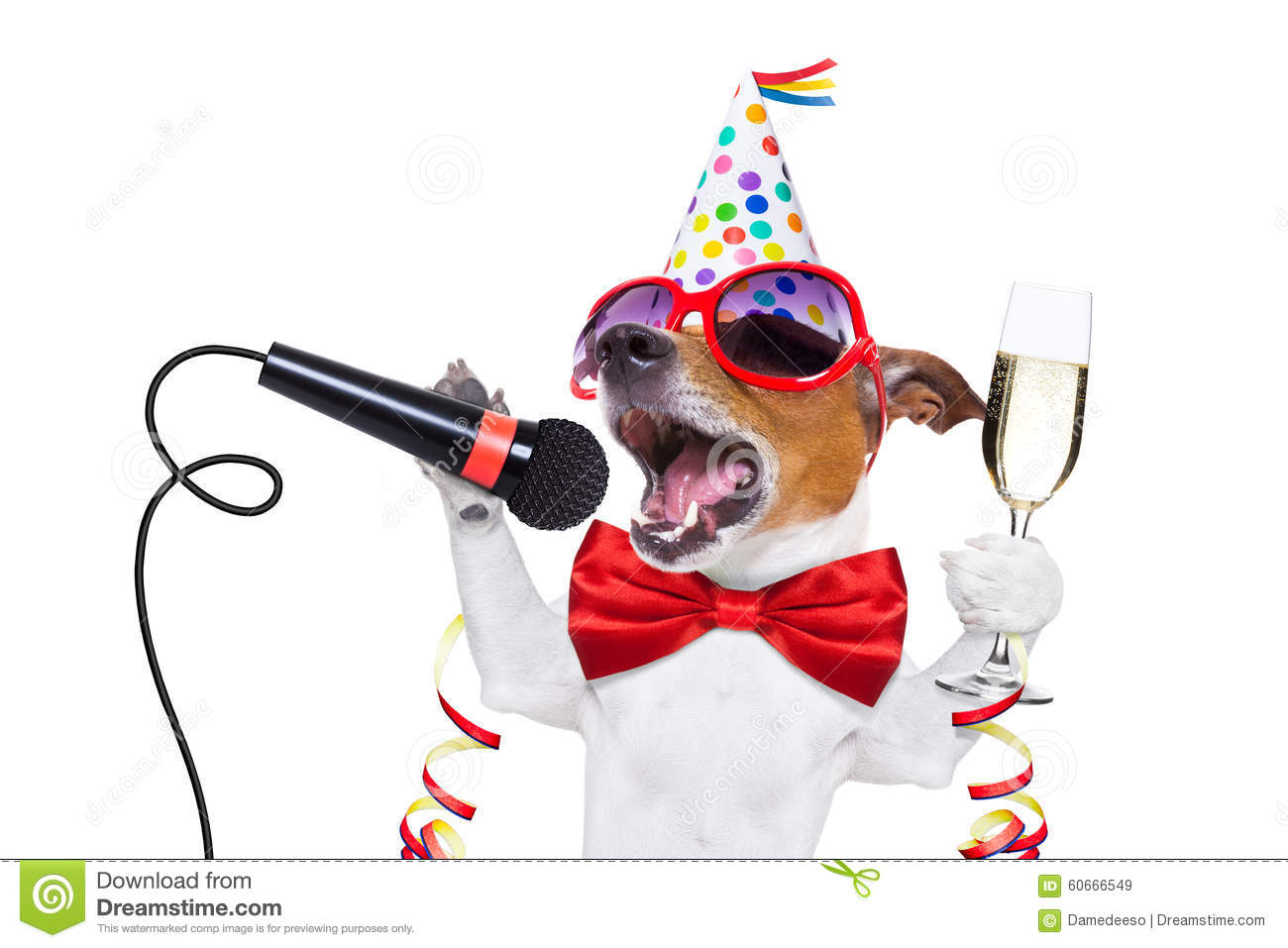 Jack russell dog celebrating new years eve with champagne and singing ...