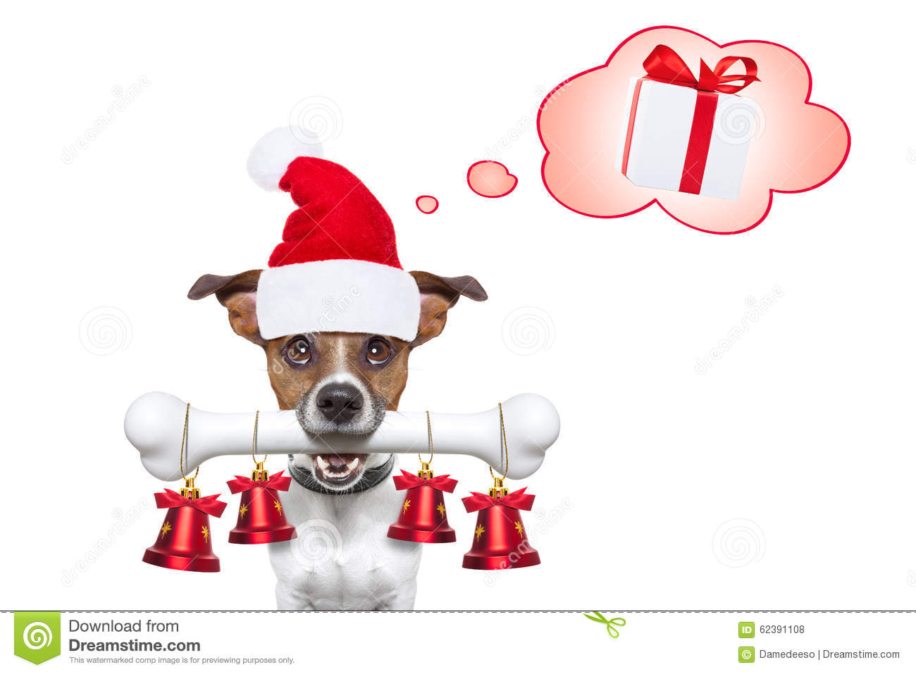 Happy new year dog stock photo. Image of puppy, funny - 62391108