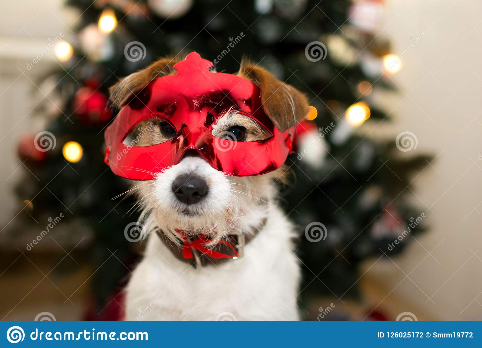 HAPPY NEW YEAR, JACK RUSSELL TERRIER CELEBRATING WITH A RED MASK
