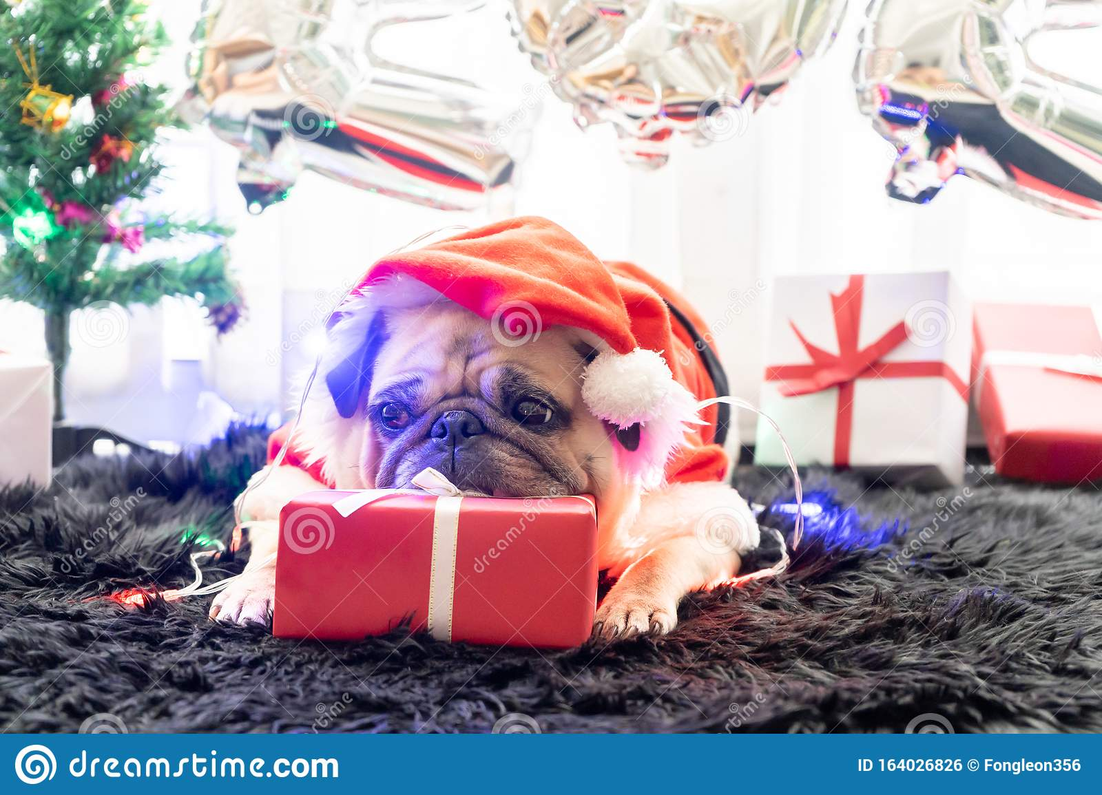 Puppy For Christmas 2020 Happy New Year 2020, Merry Christmas, Holidays And Celebration