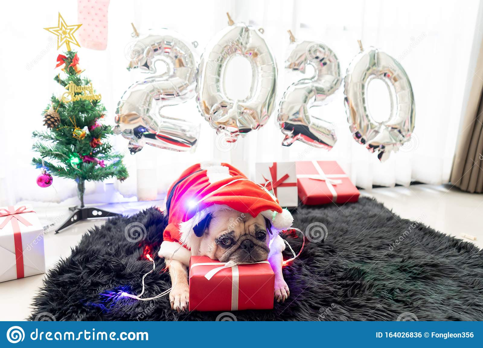 New Puppy For Christmas 2020 December Happy New Year 2020, Merry Christmas, Holidays And Celebration
