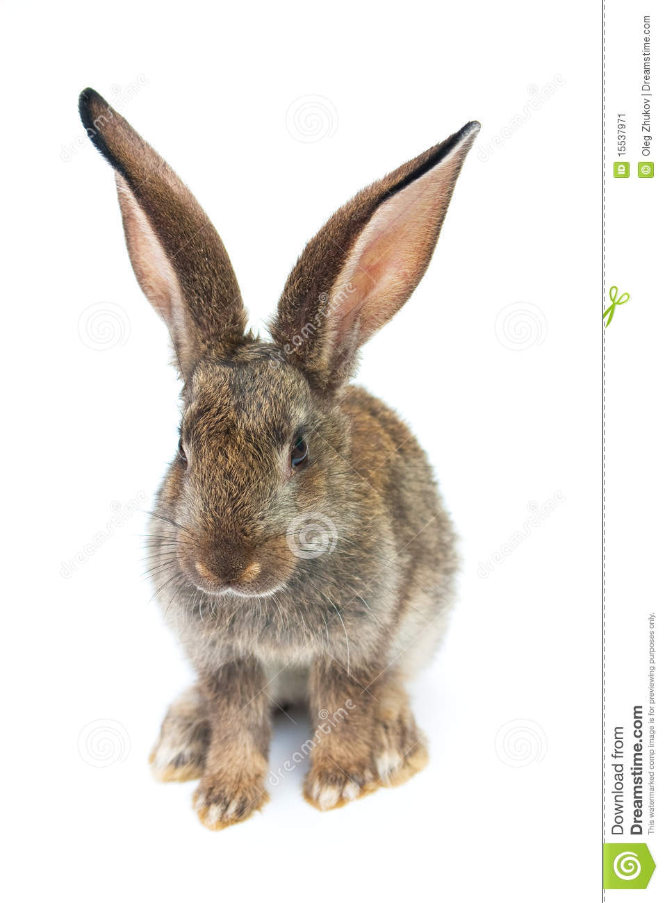 Happy New Year Of Rabbit Stock Image - Image: 15537971