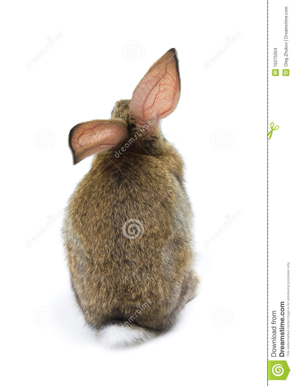 Happy New Year Of Rabbit Stock Images - Image: 16275004