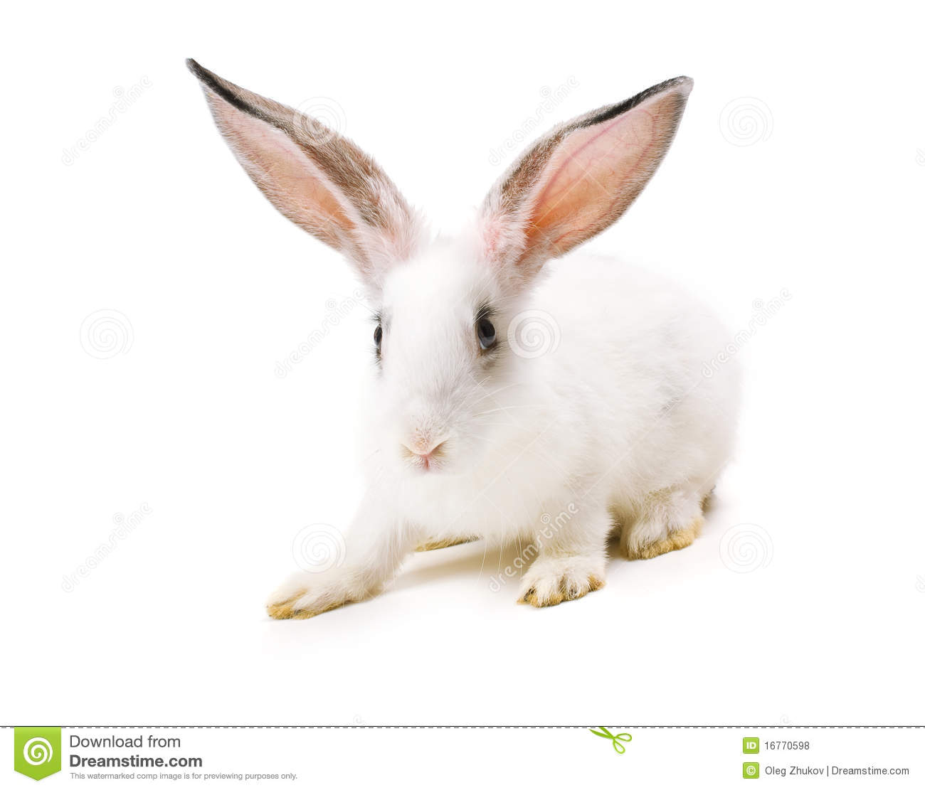 Happy New Year Of Rabbit Royalty Free Stock Photos - Image ...