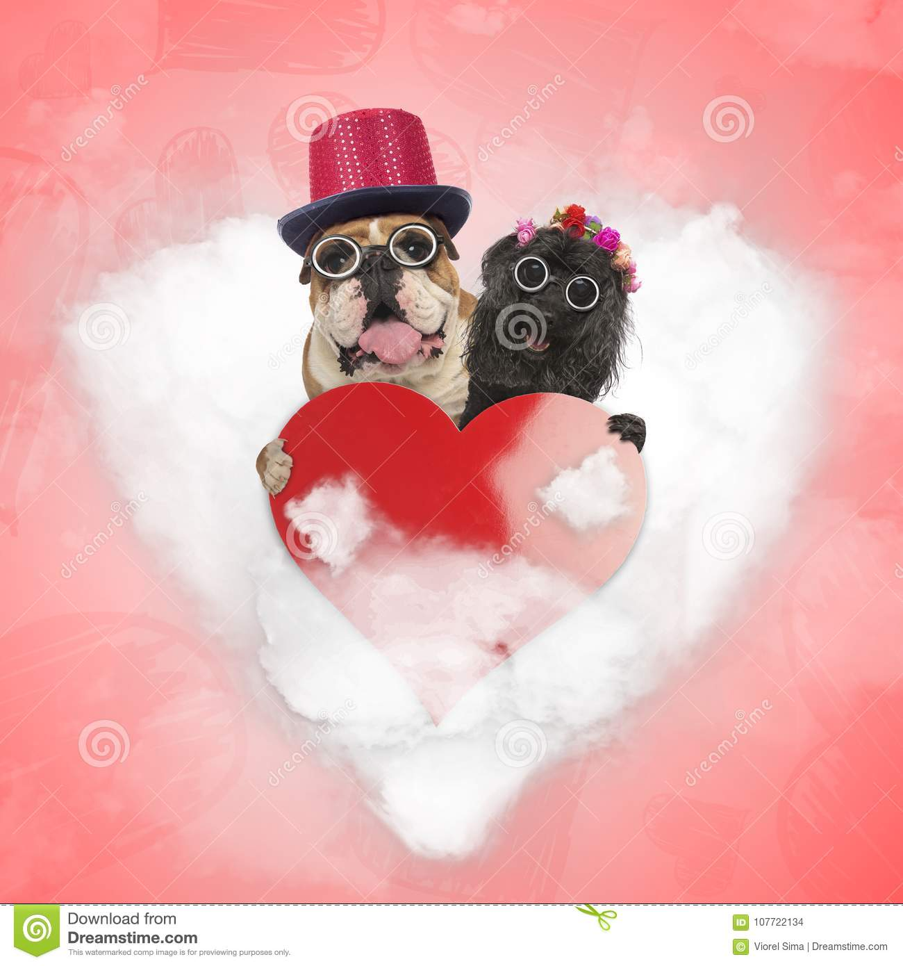 Happy old couple of dogs are still sharing their love on valentine`s day