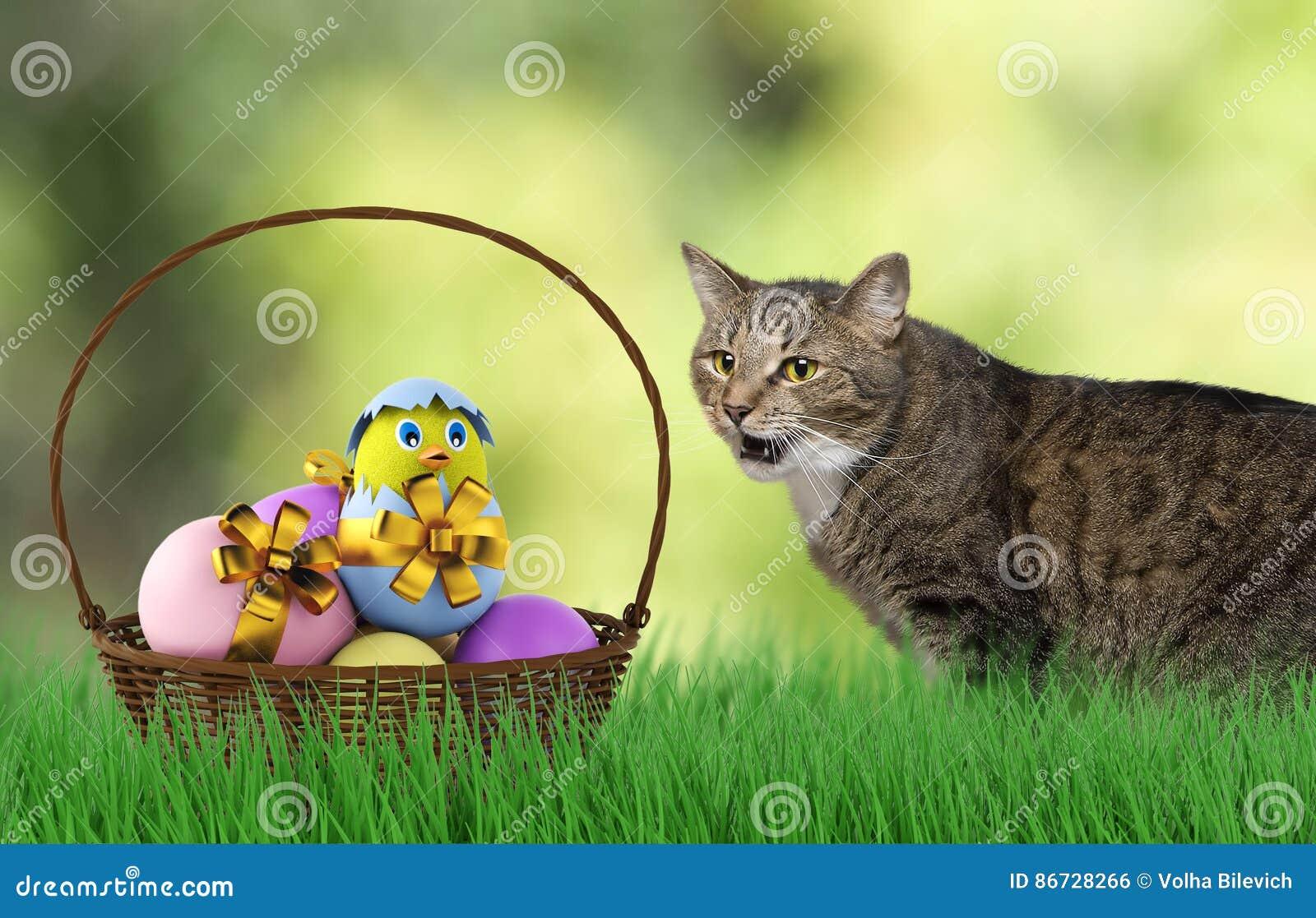 when to declaw a kitten