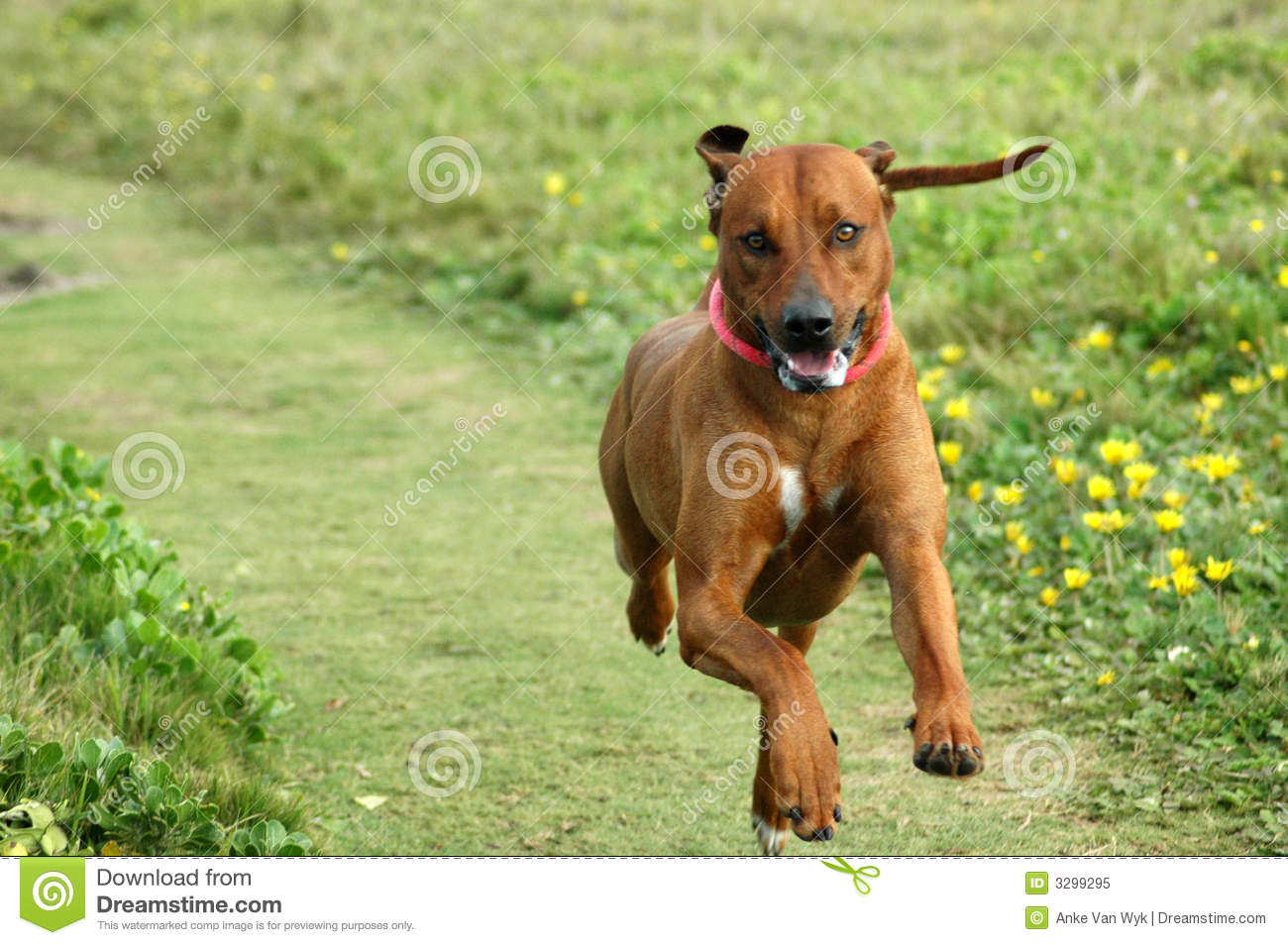 hound dog with excited...