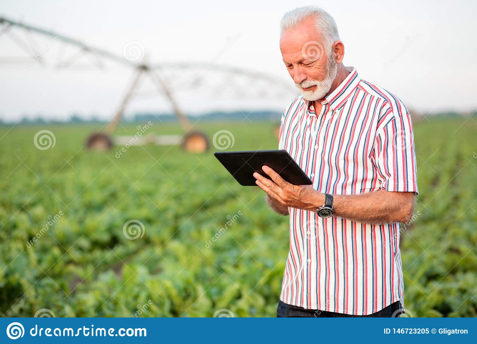 Happy and satisfied senior agronomist or farmer using a tablet in soybean field