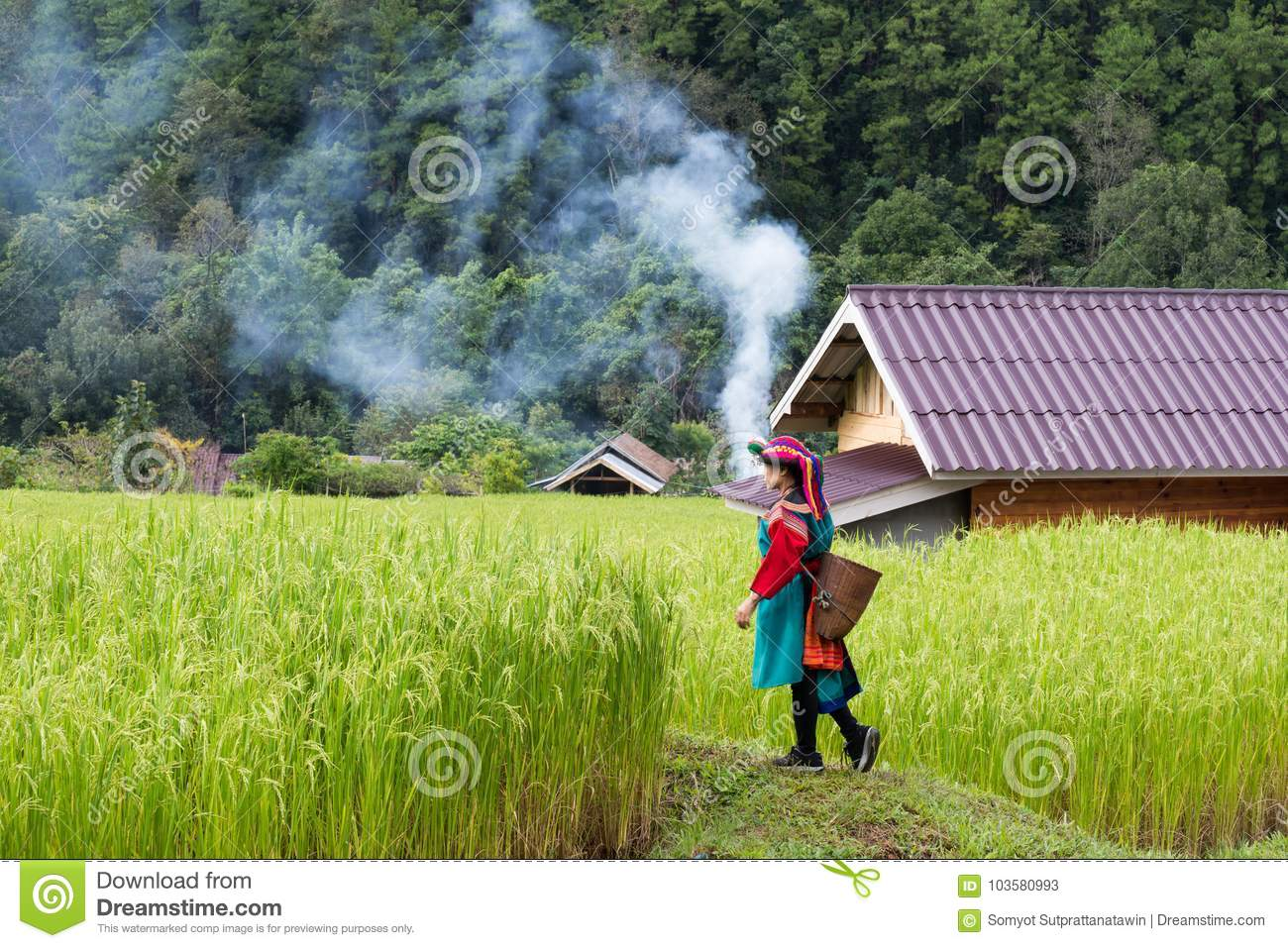 Happy smile hill tribe in paddy rice field colorful costume dress
