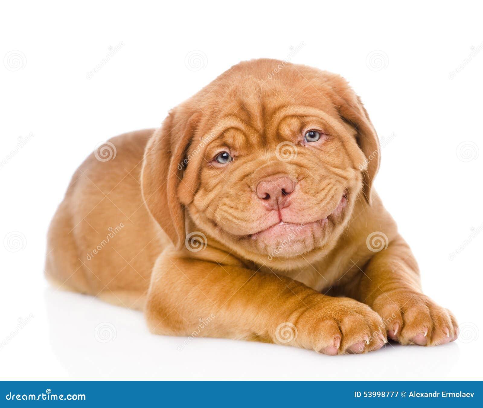 mastiff-and-baby