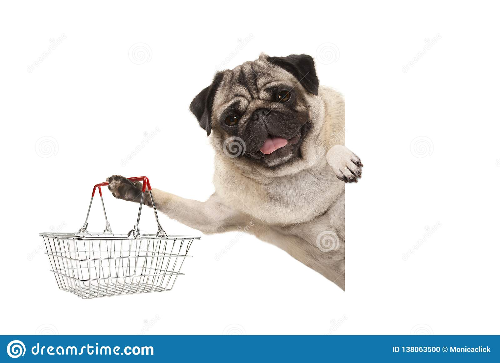 Happy smiling pug puppy dog, holding up wire metal shopping basket, behind white banner