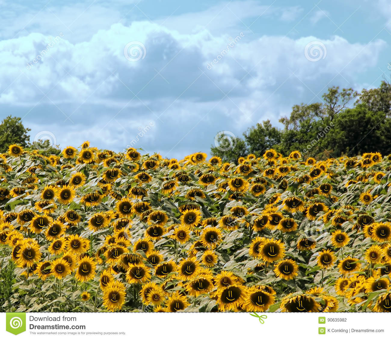 Happy Sunflowers With A Huge Bunch All Having A Smiley Face Stock