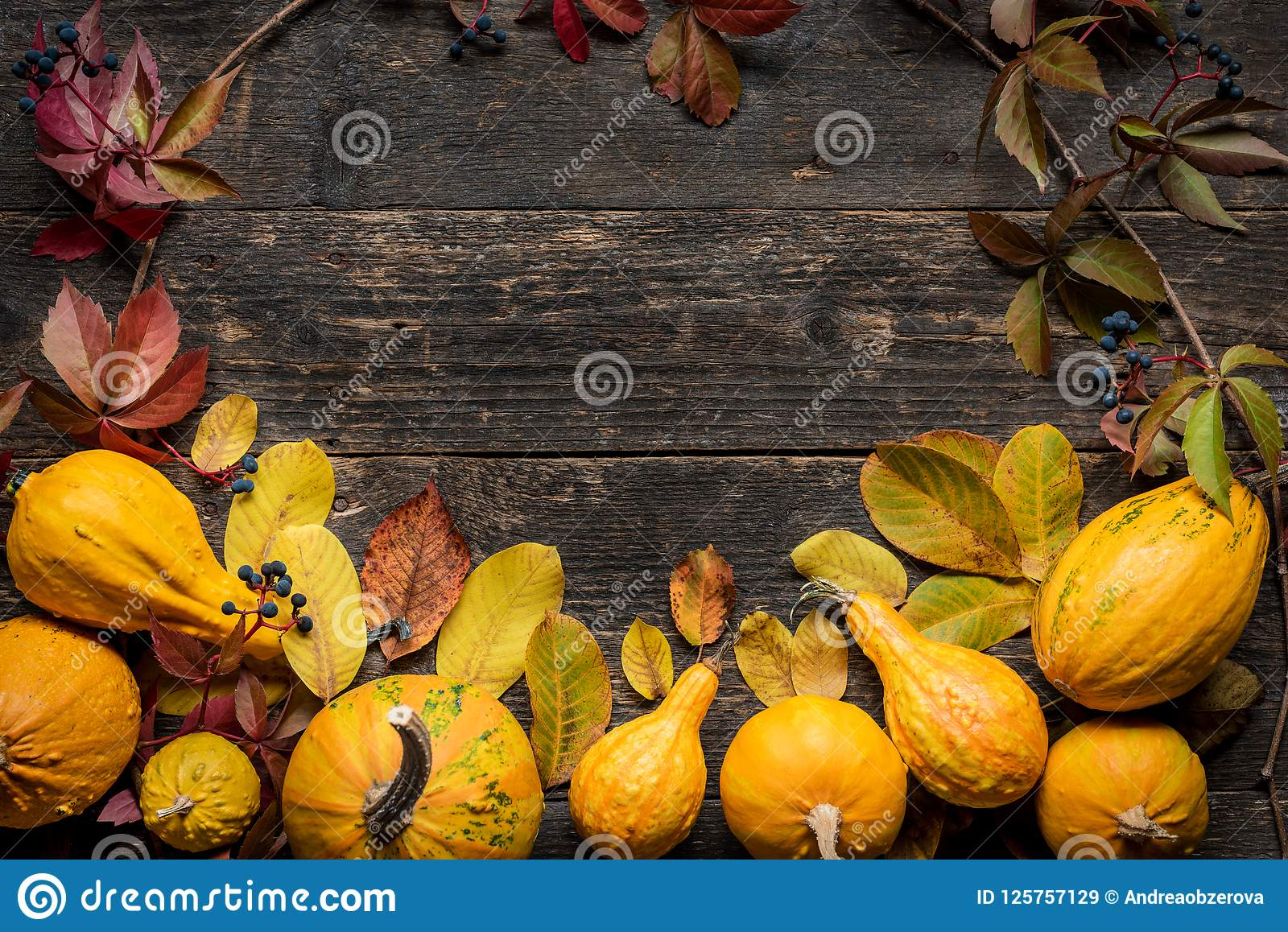 Happy Thanksgiving Background. Autumn Harvest and Holiday border. Selection of various pumpkins on dark wooden background.