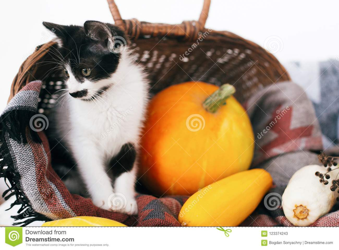 Happy Thanksgiving And Halloween Cute Kitty Sitting In Wicker B
