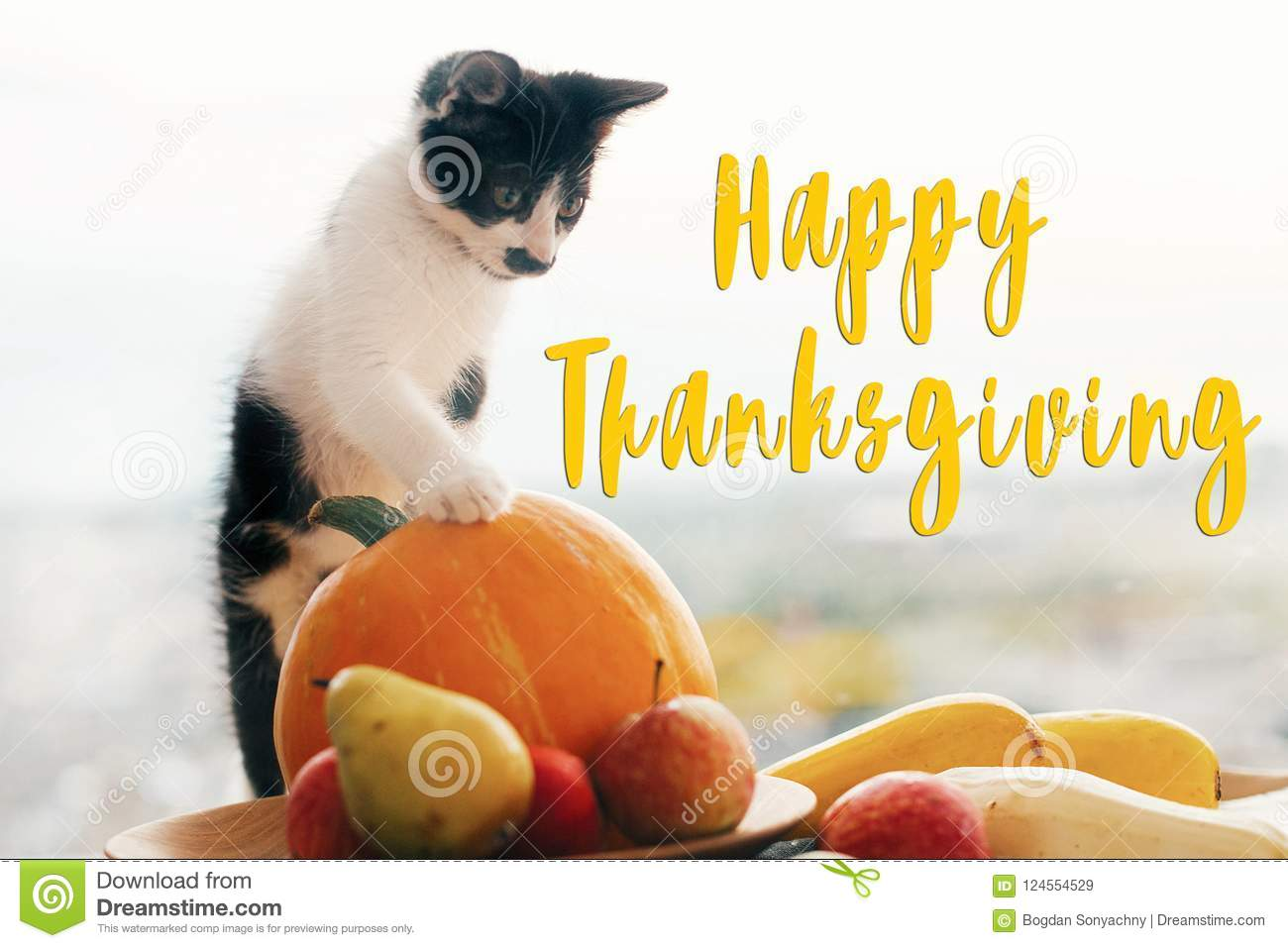 Happy Thanksgiving Text Seasons Greeting Card Sign Cute Kitty Pumpkin Wicker Basket On Wooden Background Cat And Autumn Vegetables