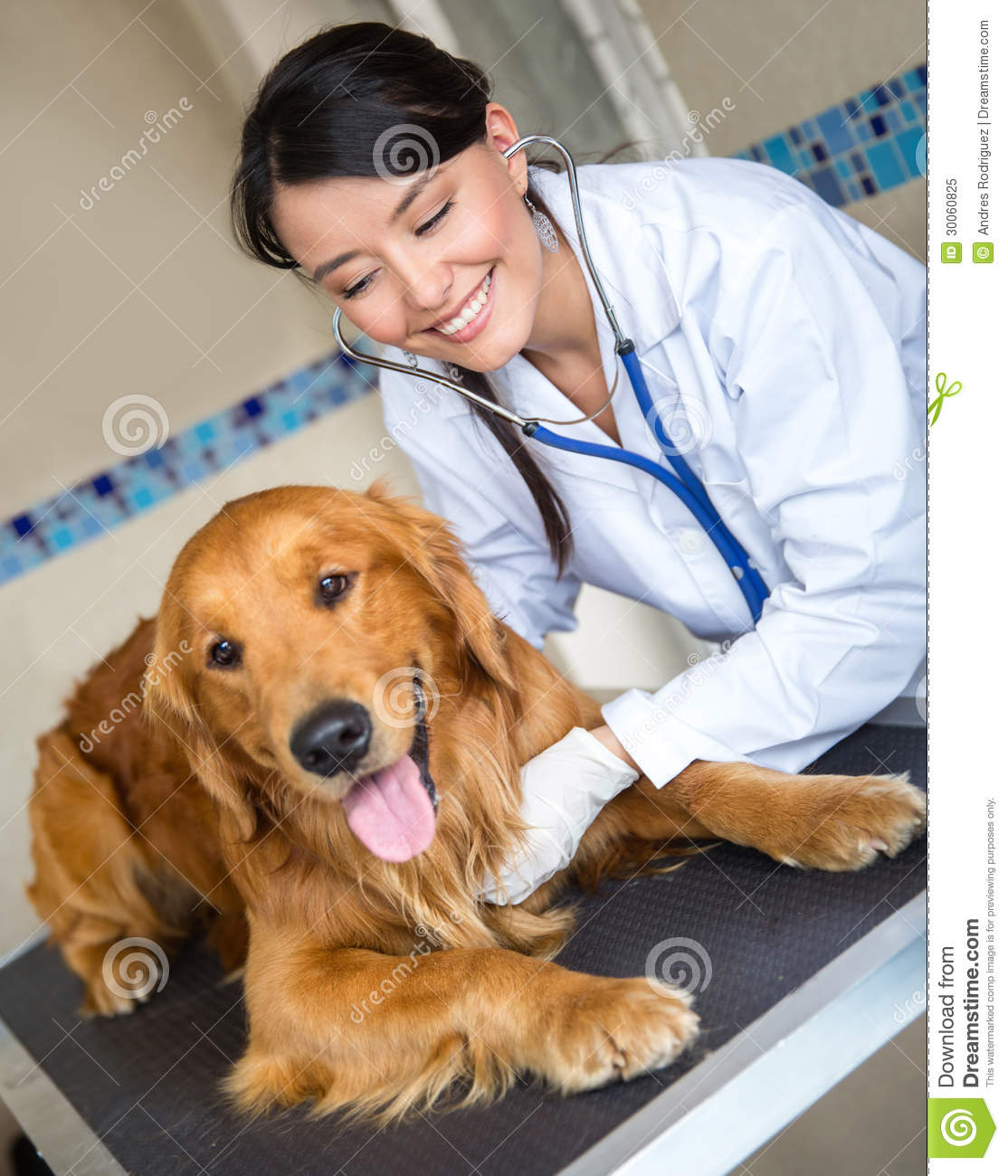 Veterinarian Checking A Dog Royalty Free Stock Photo - Image: 30060825