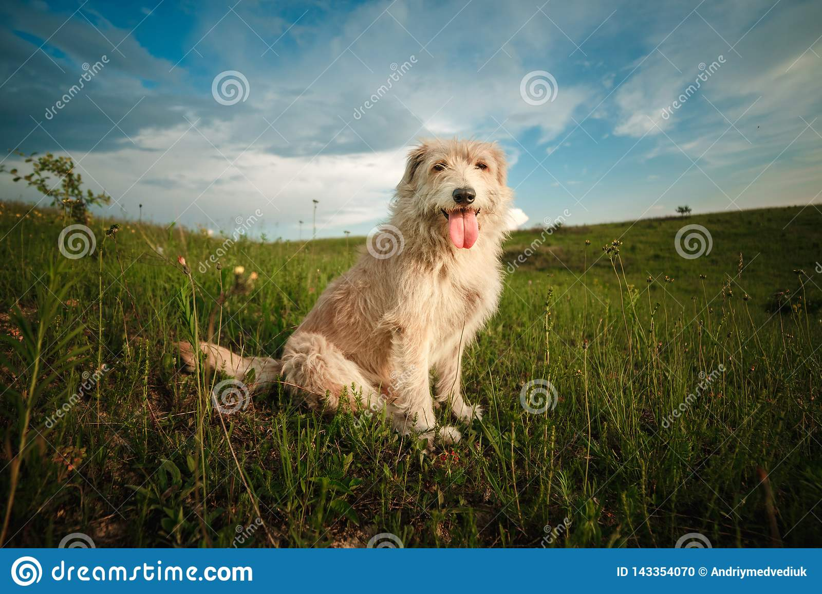 Happy white dog in the nature shows the tongue. funny dog in the nature