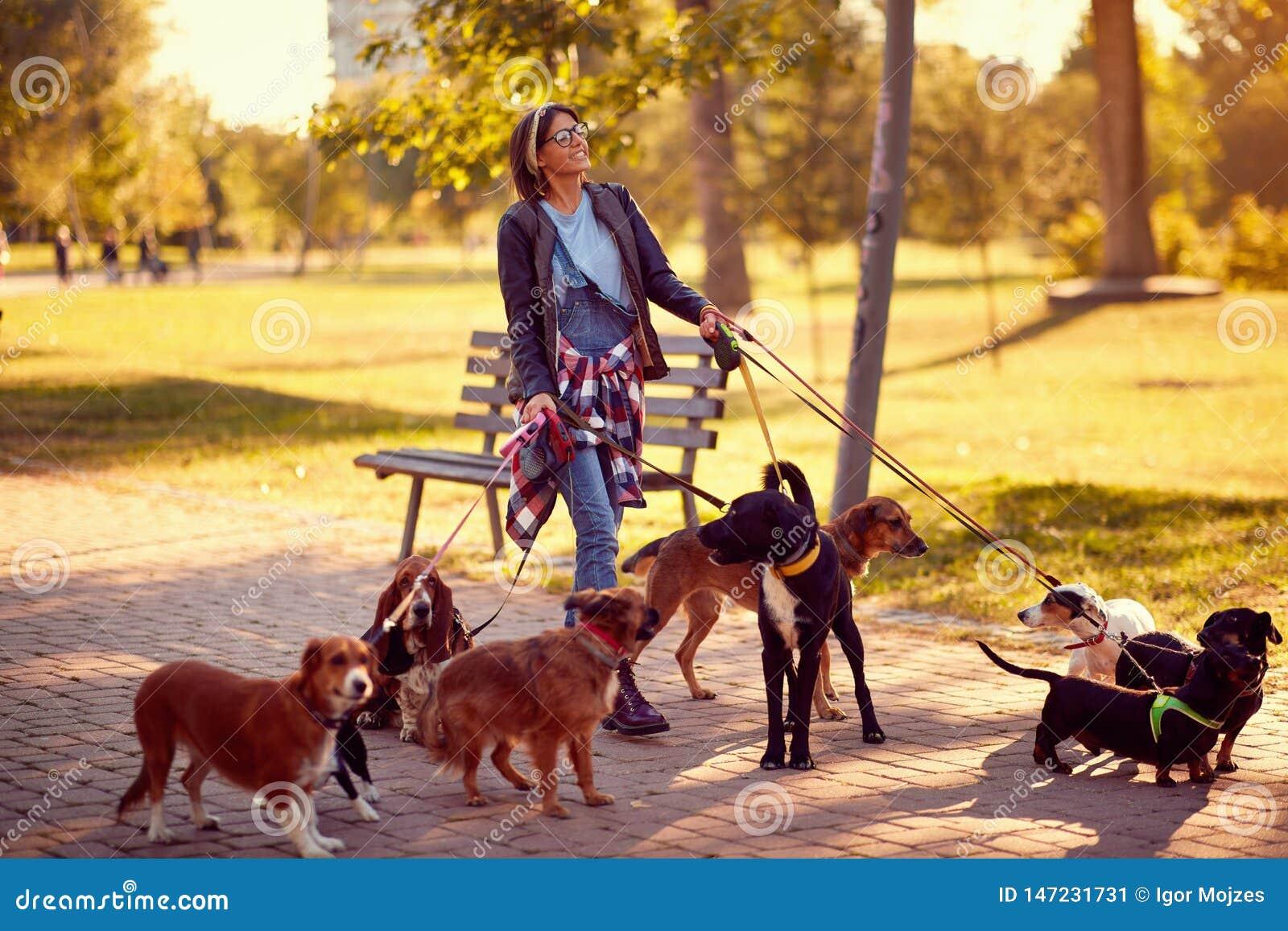 Happy woman dog walker with dogs enjoying in funny walking
