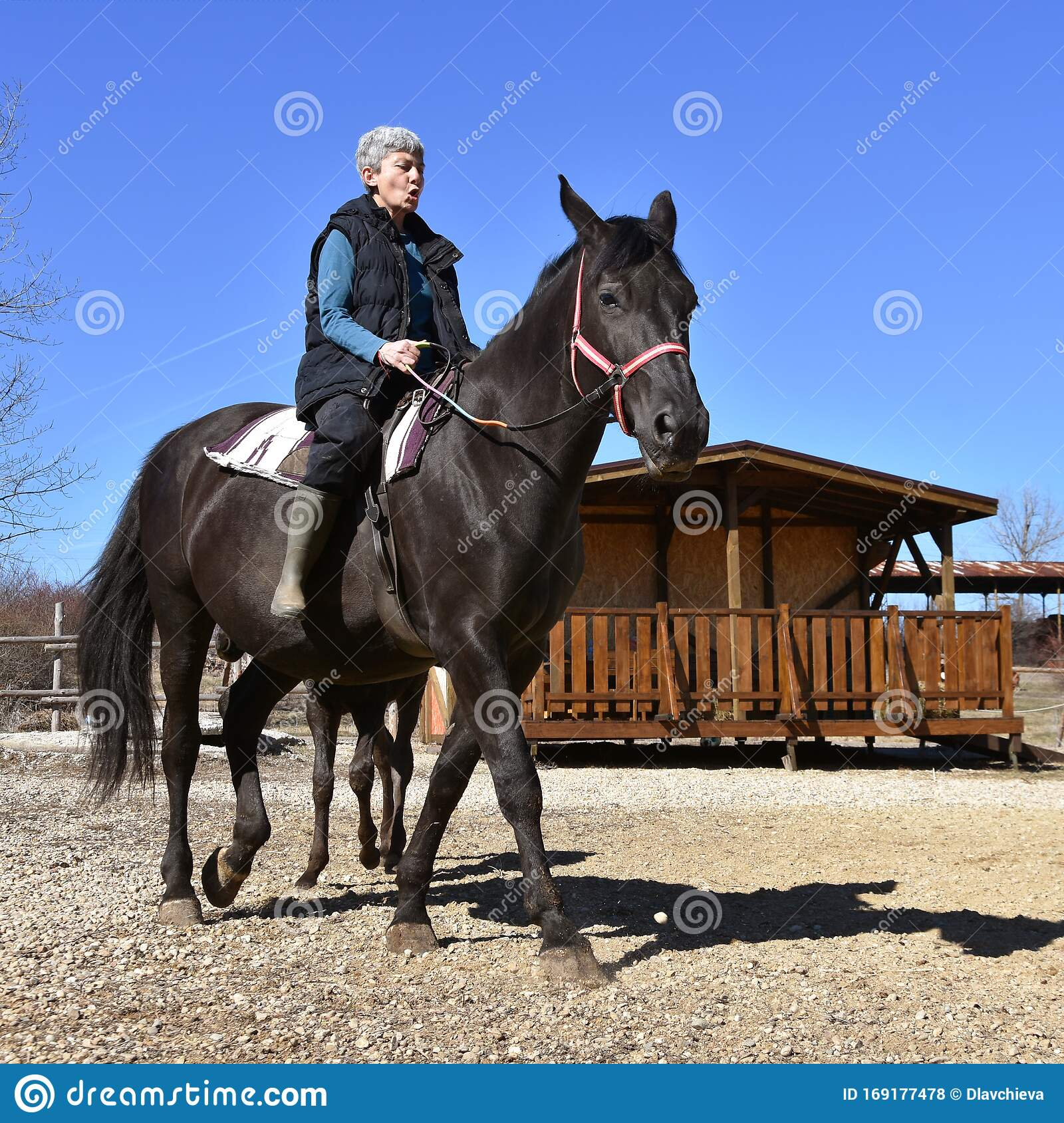 Horse Riding Therapy For Senior People Stock Photo Image Of Horse Bulgaria 169177478