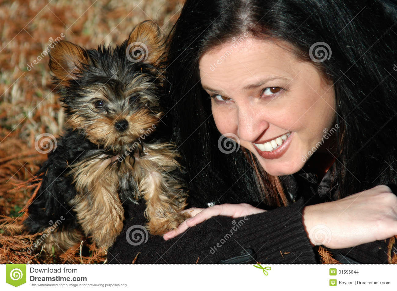 1 180 Miniature Yorkie Puppy Photos Free Royalty Free Stock Photos From Dreamstime