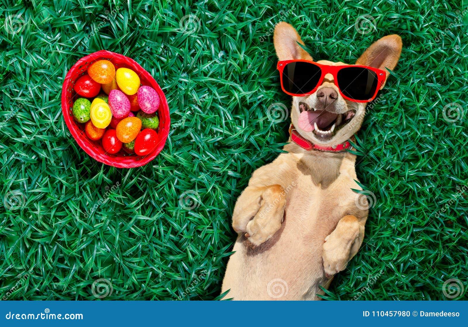 Hapy easter hund med ägg