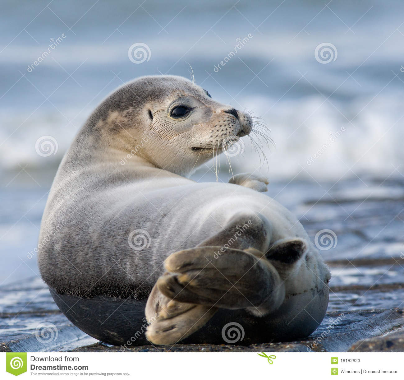 seal harbor online dating Our popular seal program is fully booked through may 2018 please check back soon for more available dates come meet our charming harbor seals.
