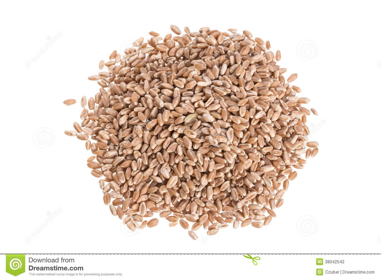 how to cook hard wheat berries