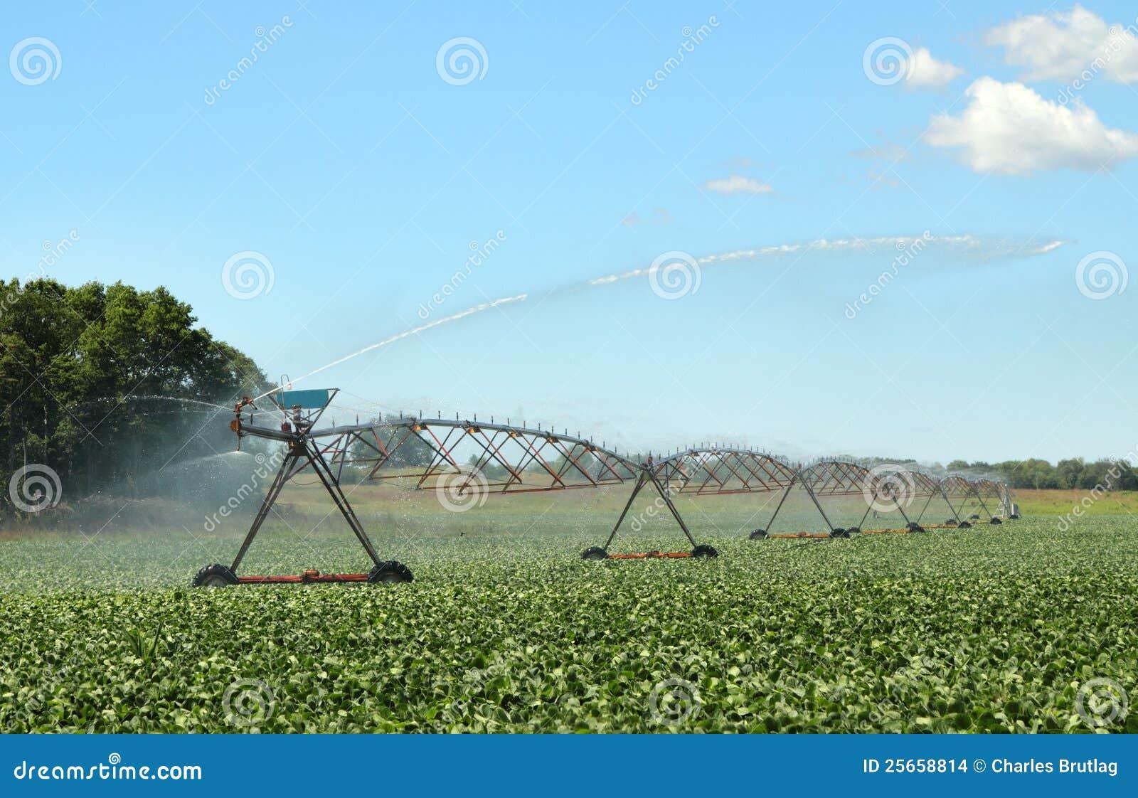 haricots de arrosage de soja photo stock - image du agriculture