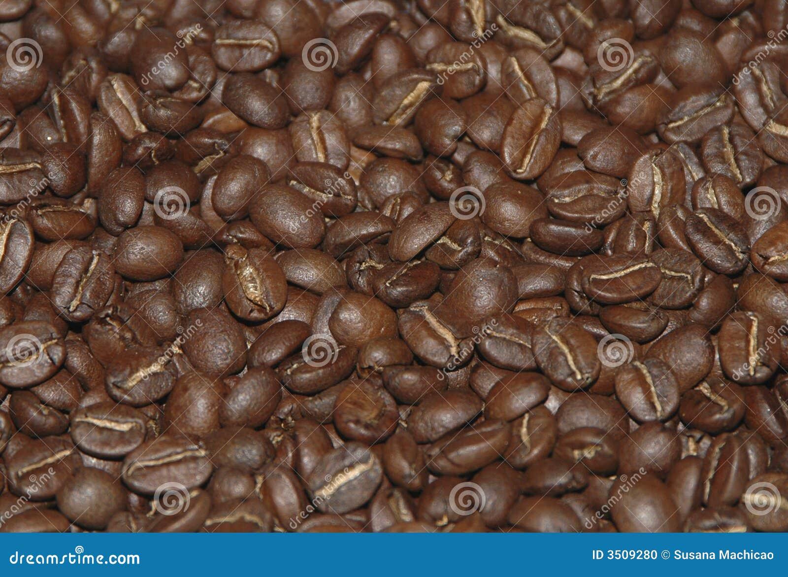 HARICOTS DU RÔTI COFFE