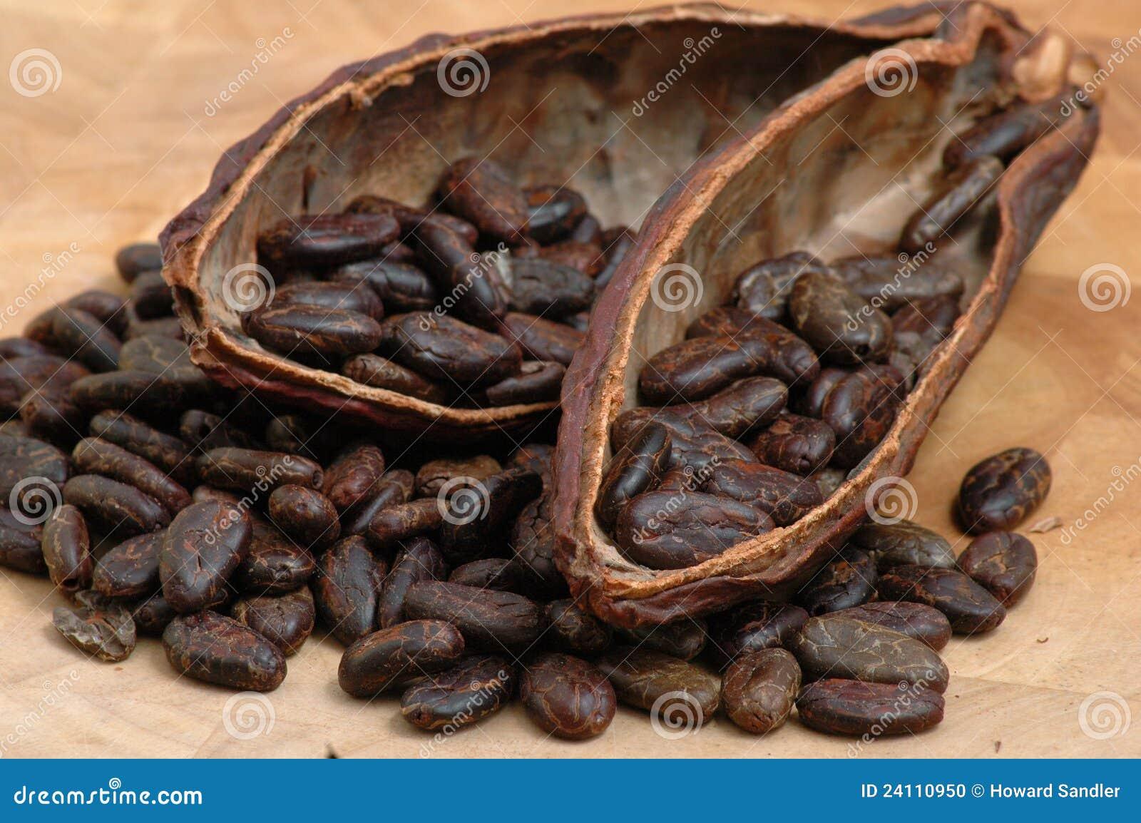 Haricots rôtis de cacao